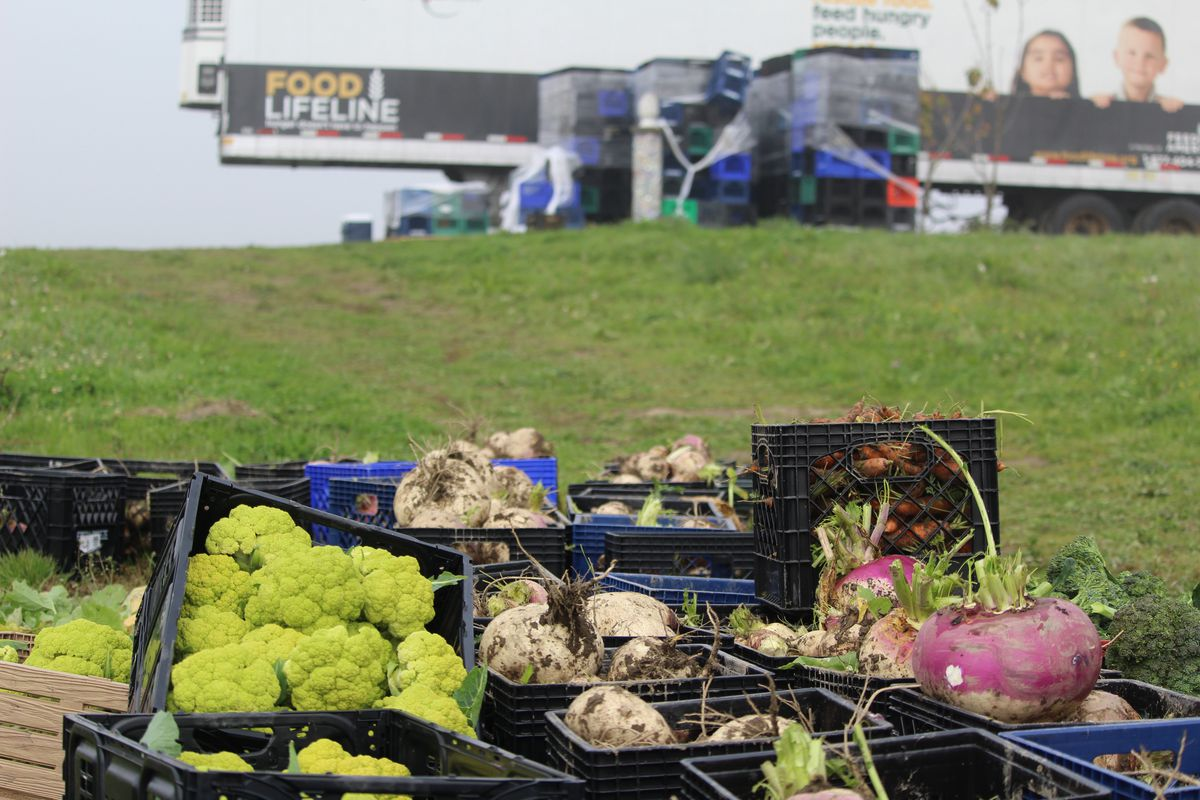 A view of a field with baskets of produce in the foreground and a large truck in the background displaying the Food Lifeline logo