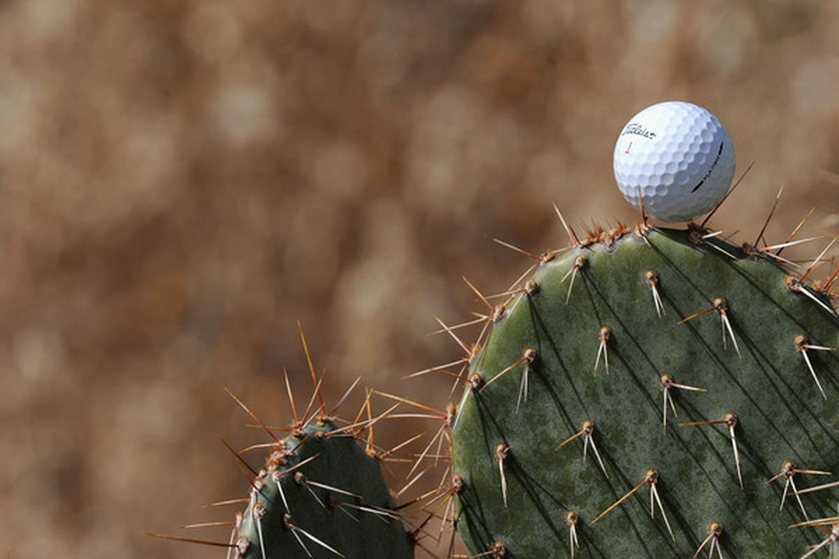 A generic photo of a golf ball on a cactus. (Photo by Stuart Franklin/Getty Images)