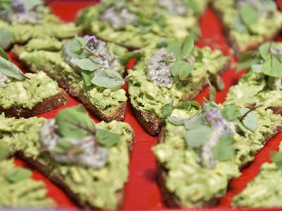 Professional Avocado Tasters Wanted in Australia