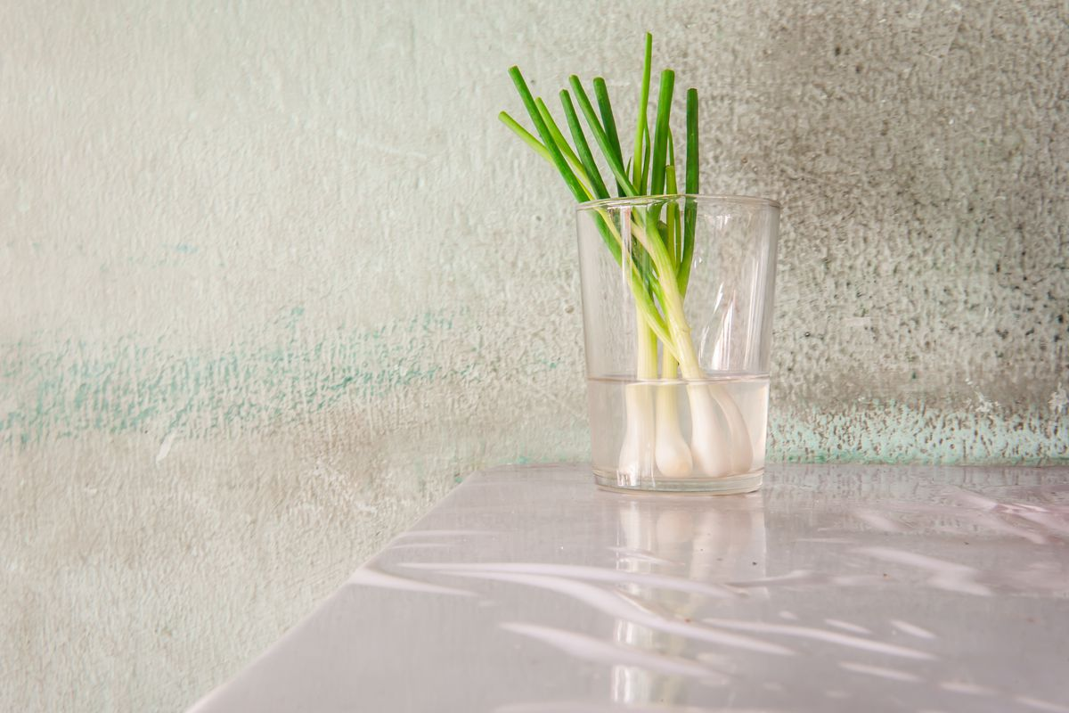 Bunches of green onions in a glass full of water.