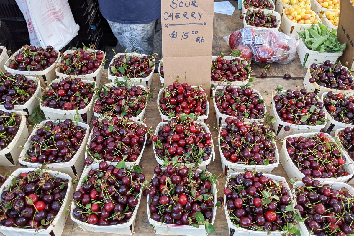 A table full of sour cherries in wooden boxes.