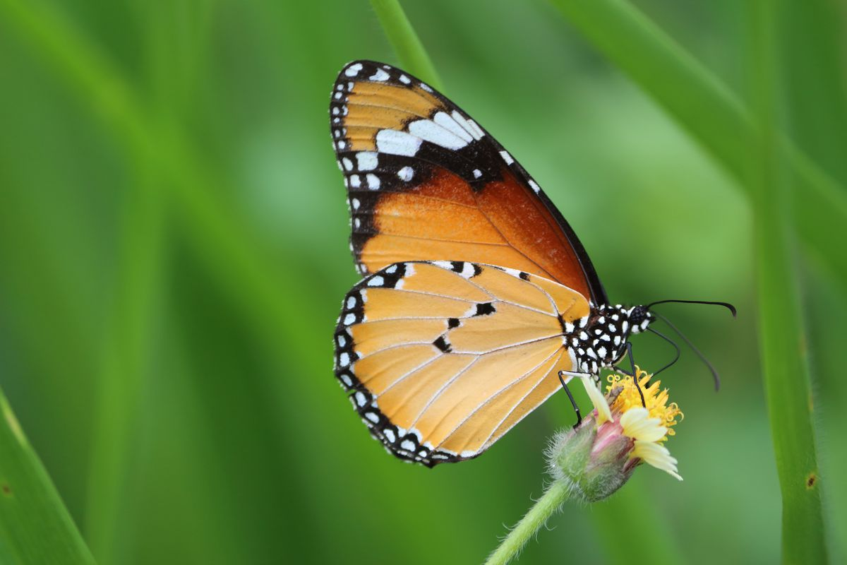 The world's biodiversity has decreased below 'safe' levels - The Verge