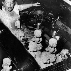 Phyllis Morris in her 1953 pink Eldorado Cadillac delivering her pink poodle lamps in West Hollywood with pink-dyed poodles Pamela and Scherzo in the front seat. <i>[Photo courtesy Phyllis Morris]</i>