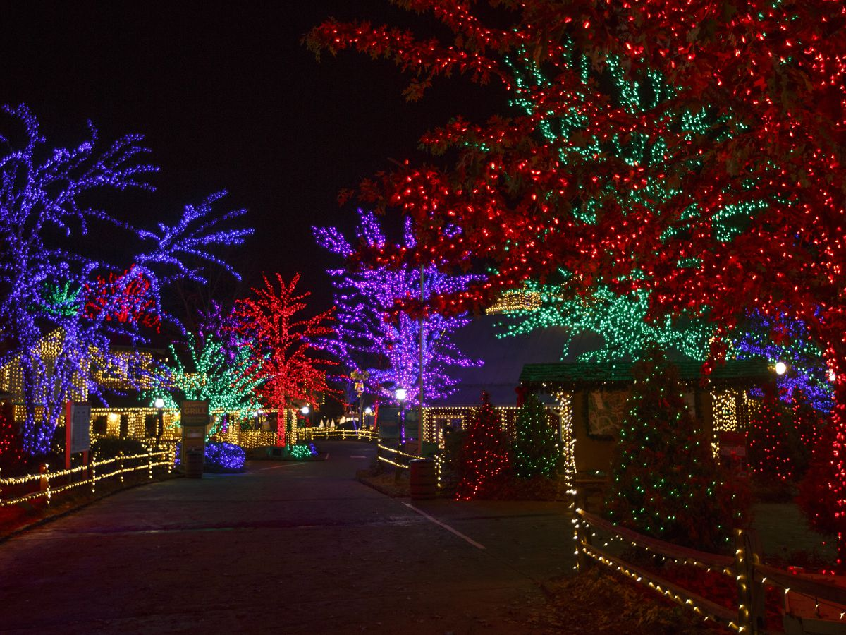 Multiple trees line a path at night. All of the trees are illuminated with colorful lights.