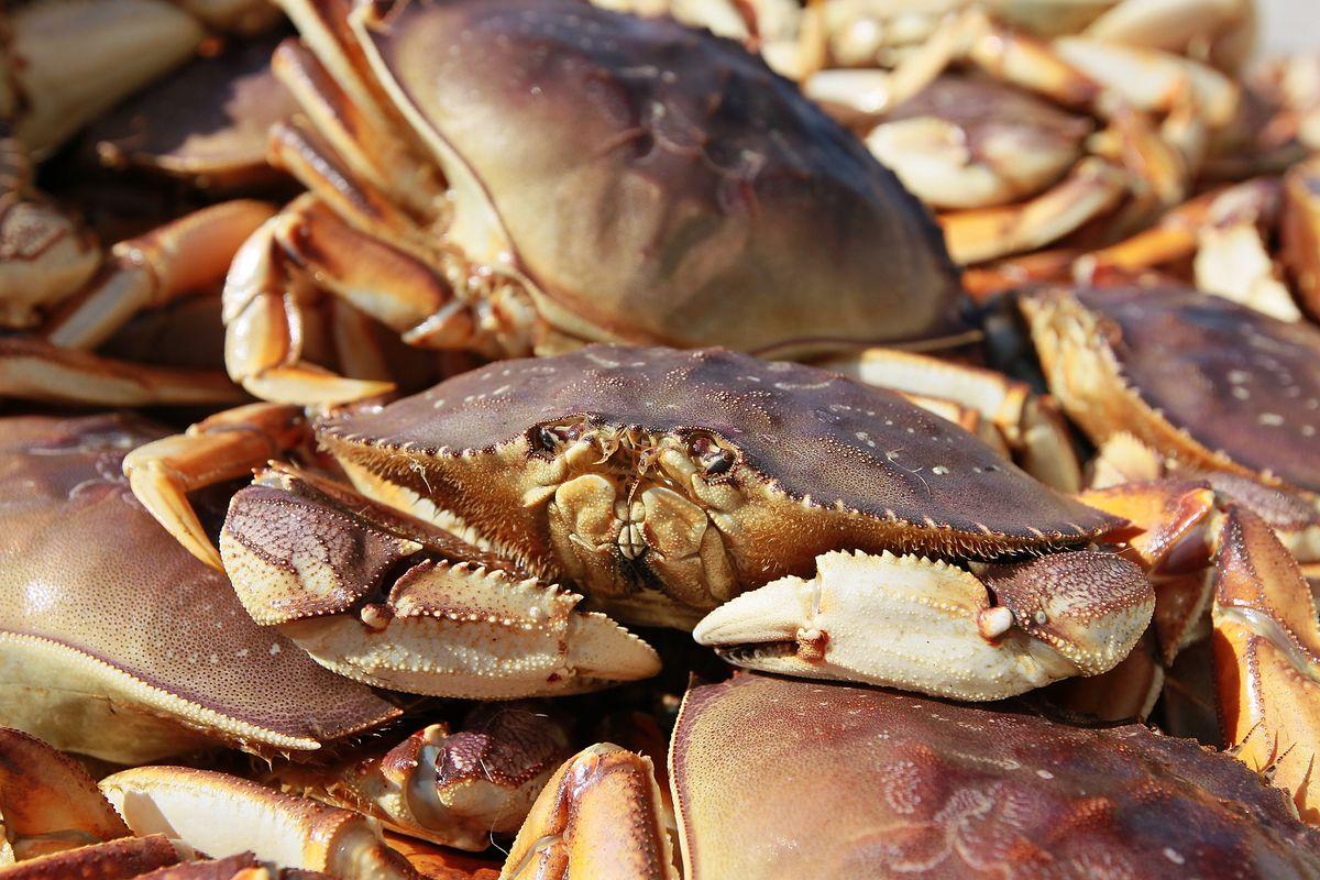 California's Dungeness Crab Seasons Starts