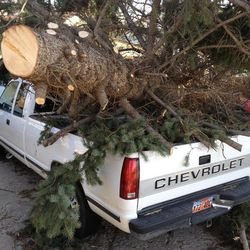 A large tree rests on top of a pickup truck at 363 E. 550 North in Bountiful Thursday, Dec. 1, 2011.
