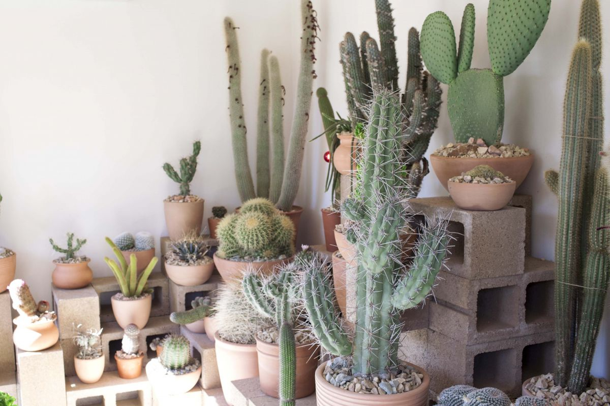 """Photo: <a href=""""http://howyouglow.com/hot-cactus/#"""">How You Glow</a>"""