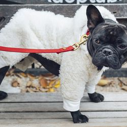 """<a href=""""https://instagram.com/roycethefrenchie"""">@roycethefrenchie</a>"""