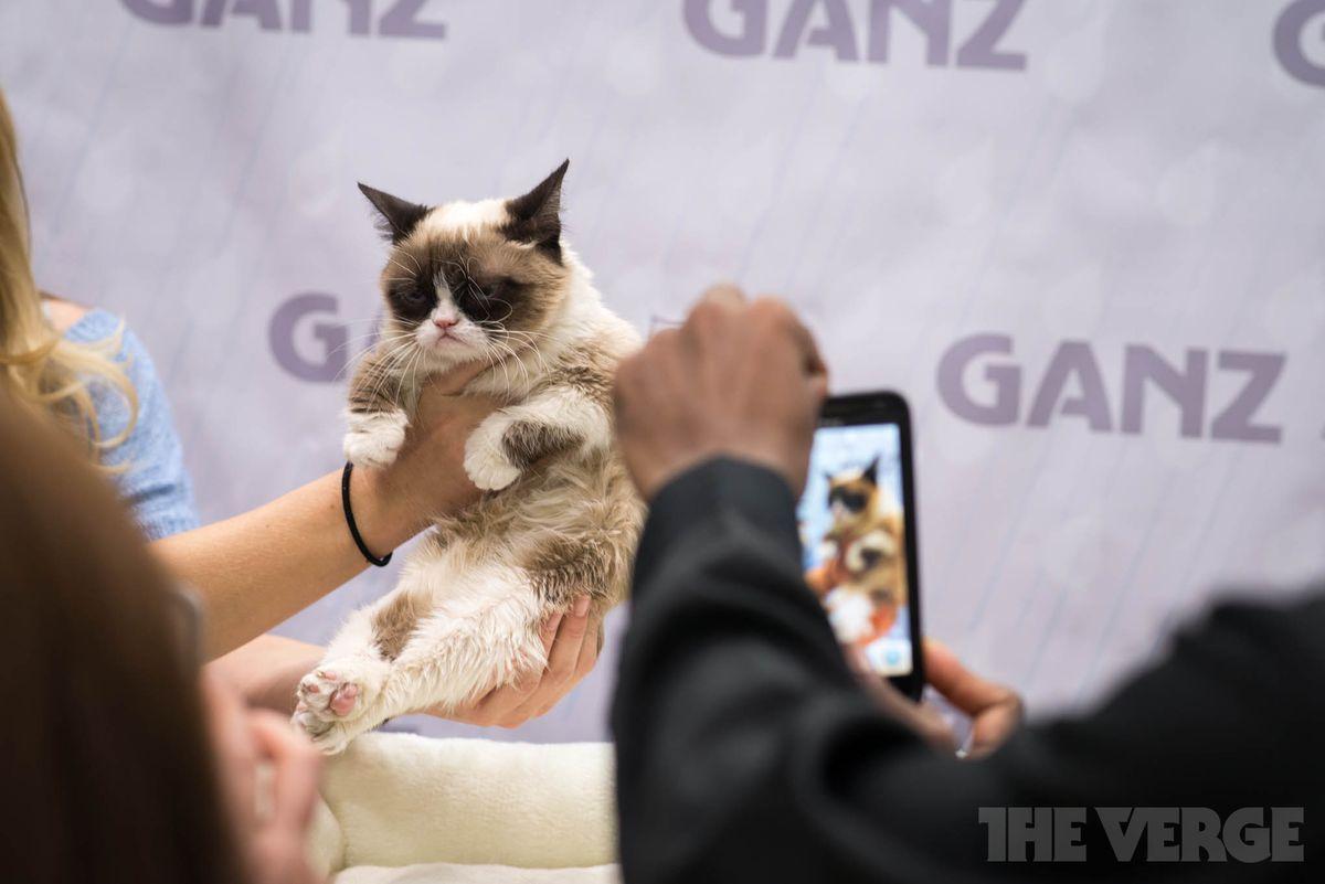 Grumpy Cat (STOCK)