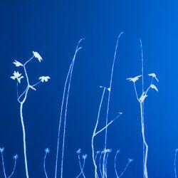 Lightweeds