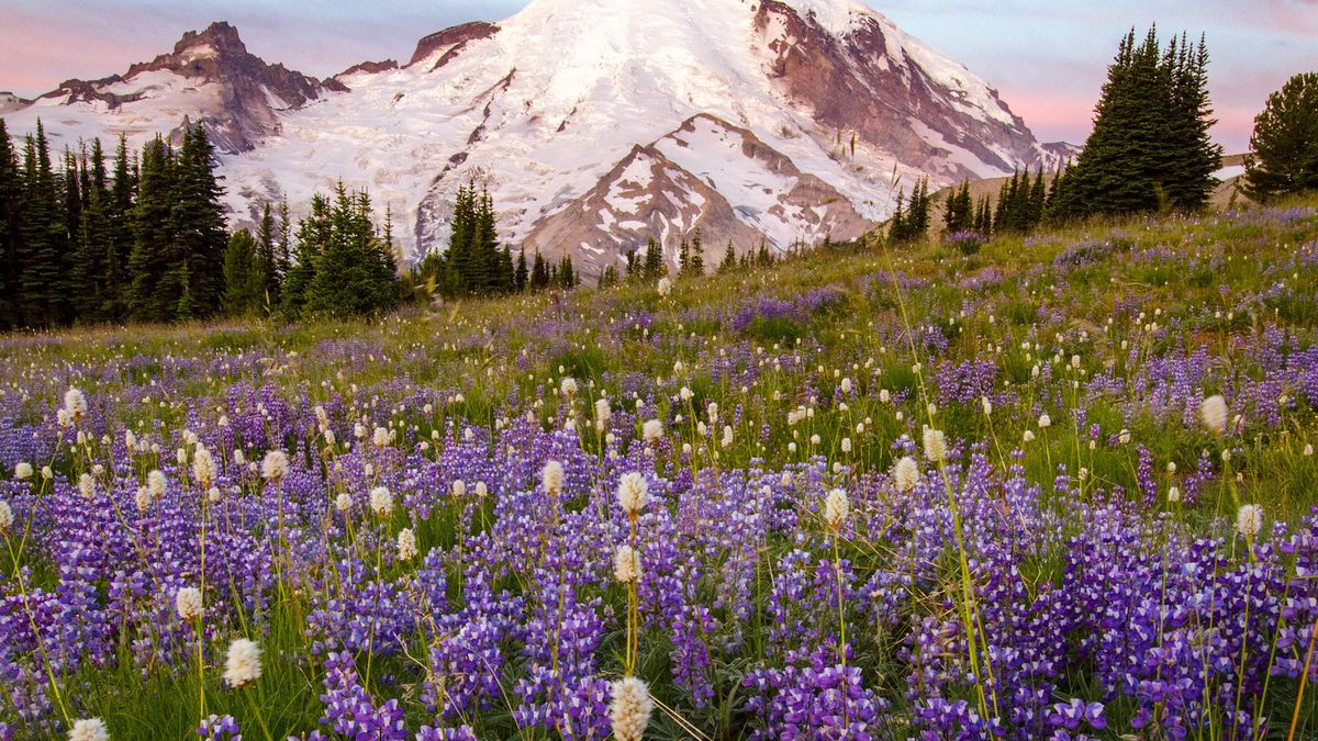 18 Wildflower Hikes Near Seattle To Explore Curbed Seattle