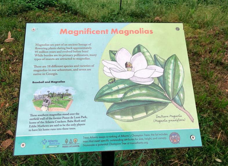 A marker explaining magnolias in Atlanta.