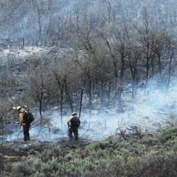 Hand crews dig a fire line as they fight a wildfire burning in the Dutch Hollow area of Midway on Tuesday, May 12, 2020.