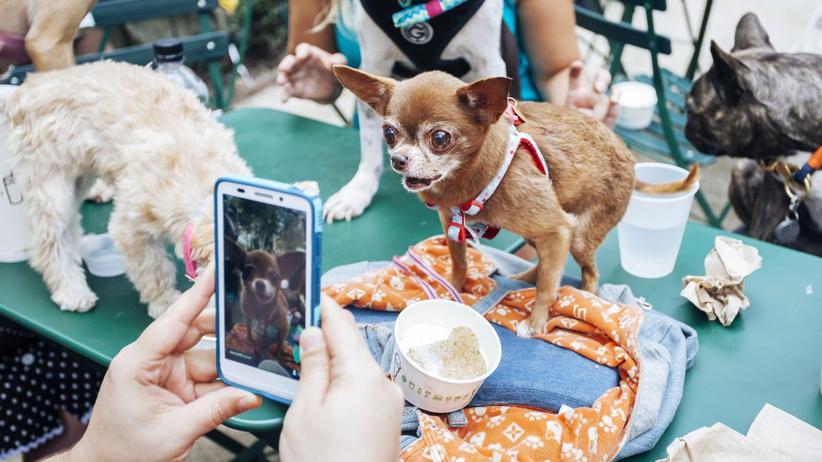 The Fast, Furry Rise of the Instagram-Famous Pet