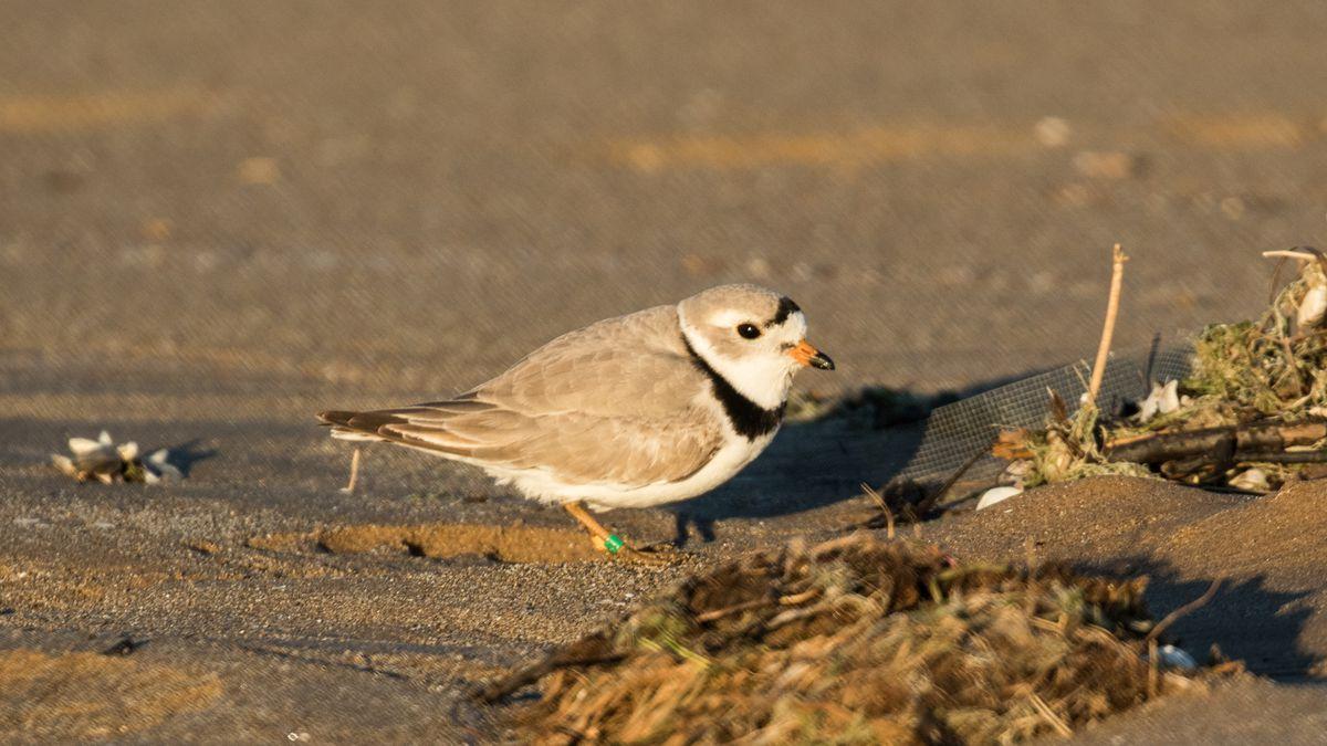 A small bird on a sandy beach.