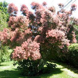 The arboretum features many different and unusual varieties of trees.