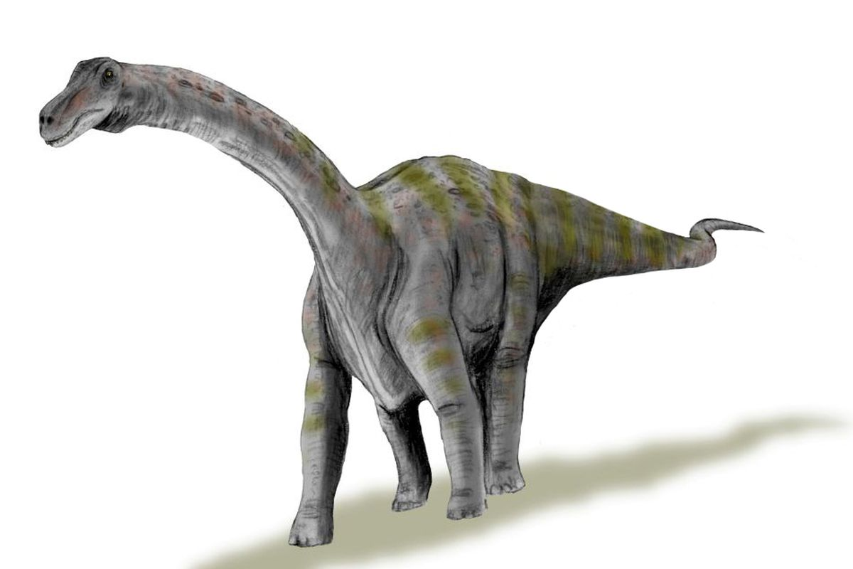 this enormous dinosaur started out life the size of a human baby