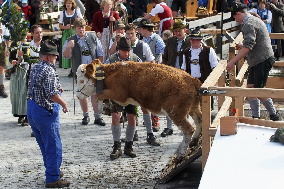 """""""Almabtrieb,"""" the Bavarian equivalent to a State Fair. With, assuredly, more beer."""