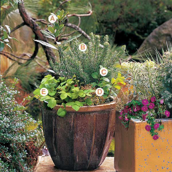 How To Plant In Pots This Old House