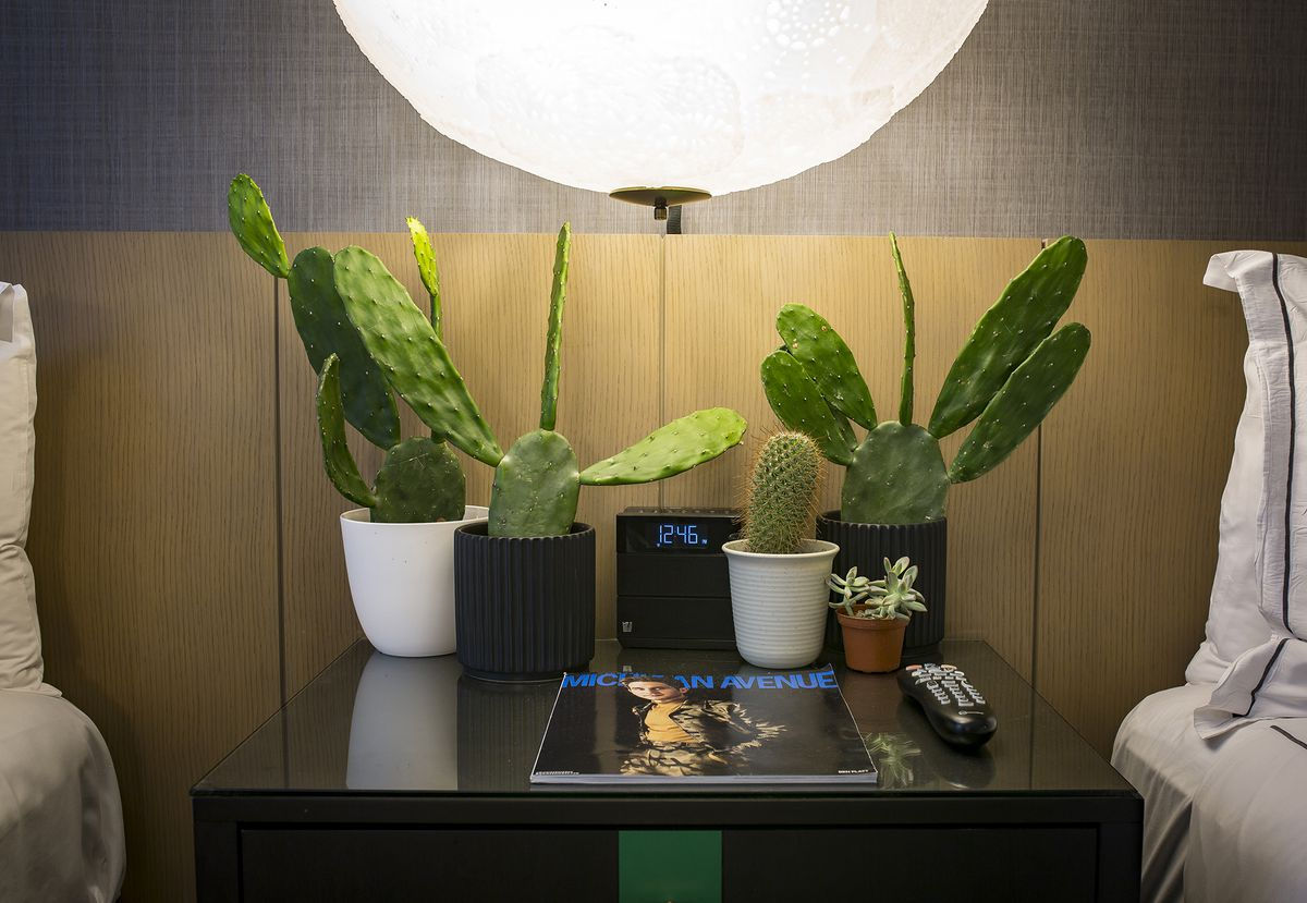 There are four potted cacti and one small succulent on a black night stand next to a digital clock, magazine and tv remote.