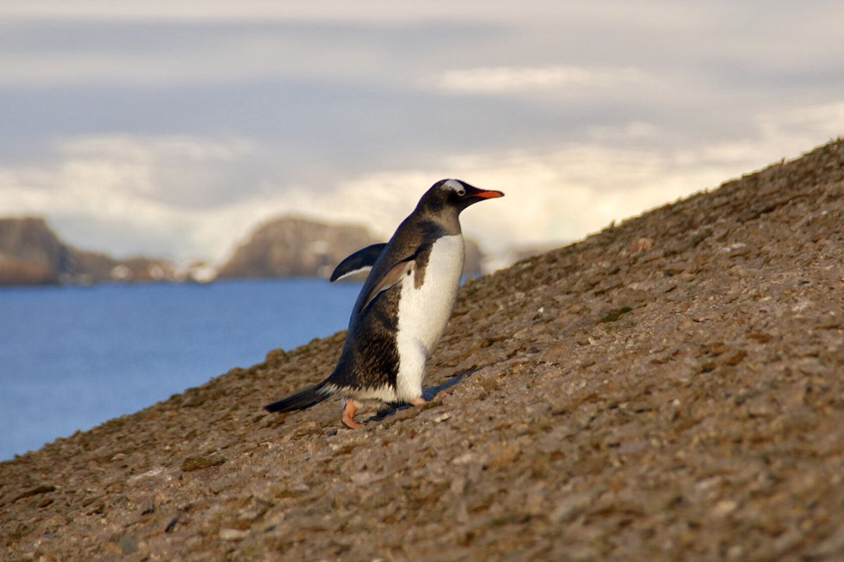 Poopy seabirds help spread the world's nutrients around