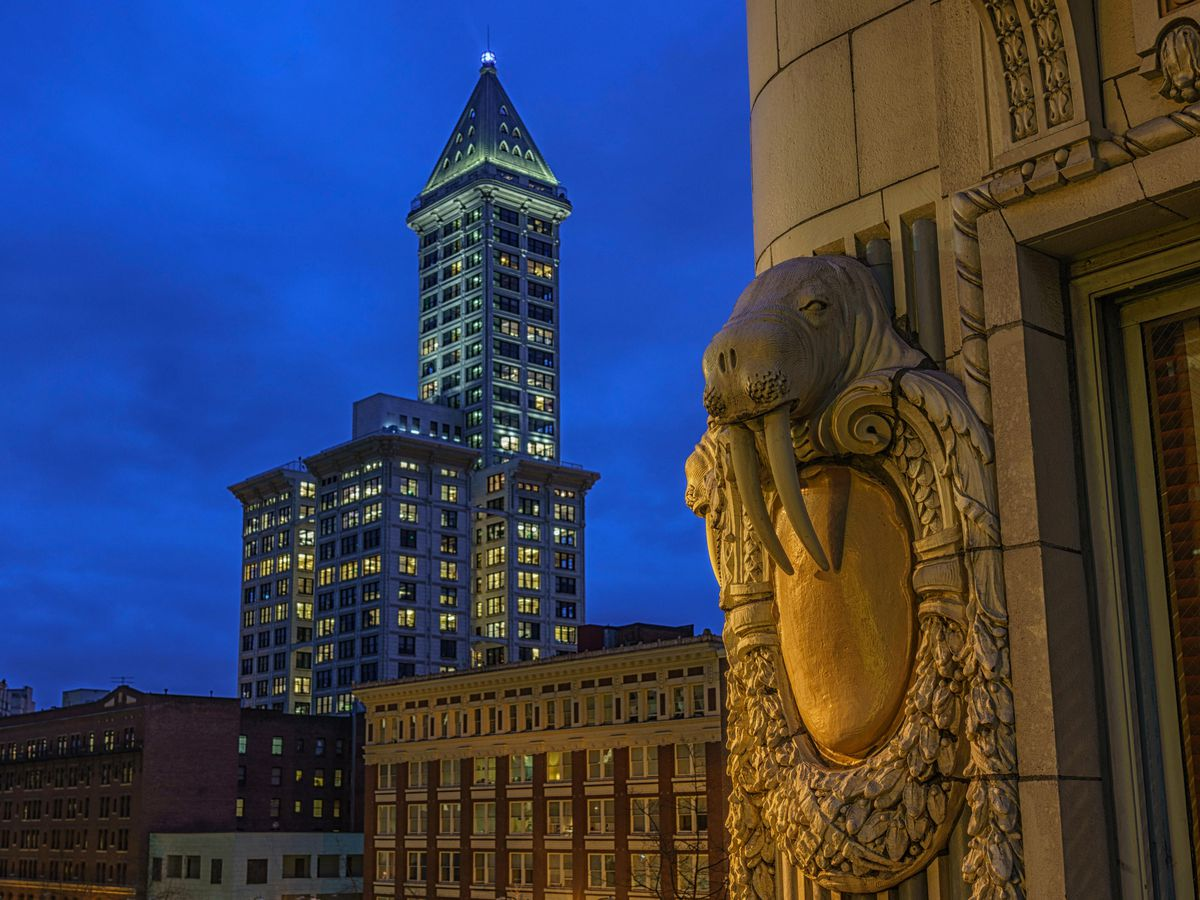 A close-up detail of a building's terra-cotta ornament of a walrus. It's nighttime, and there are more buildings in the background.
