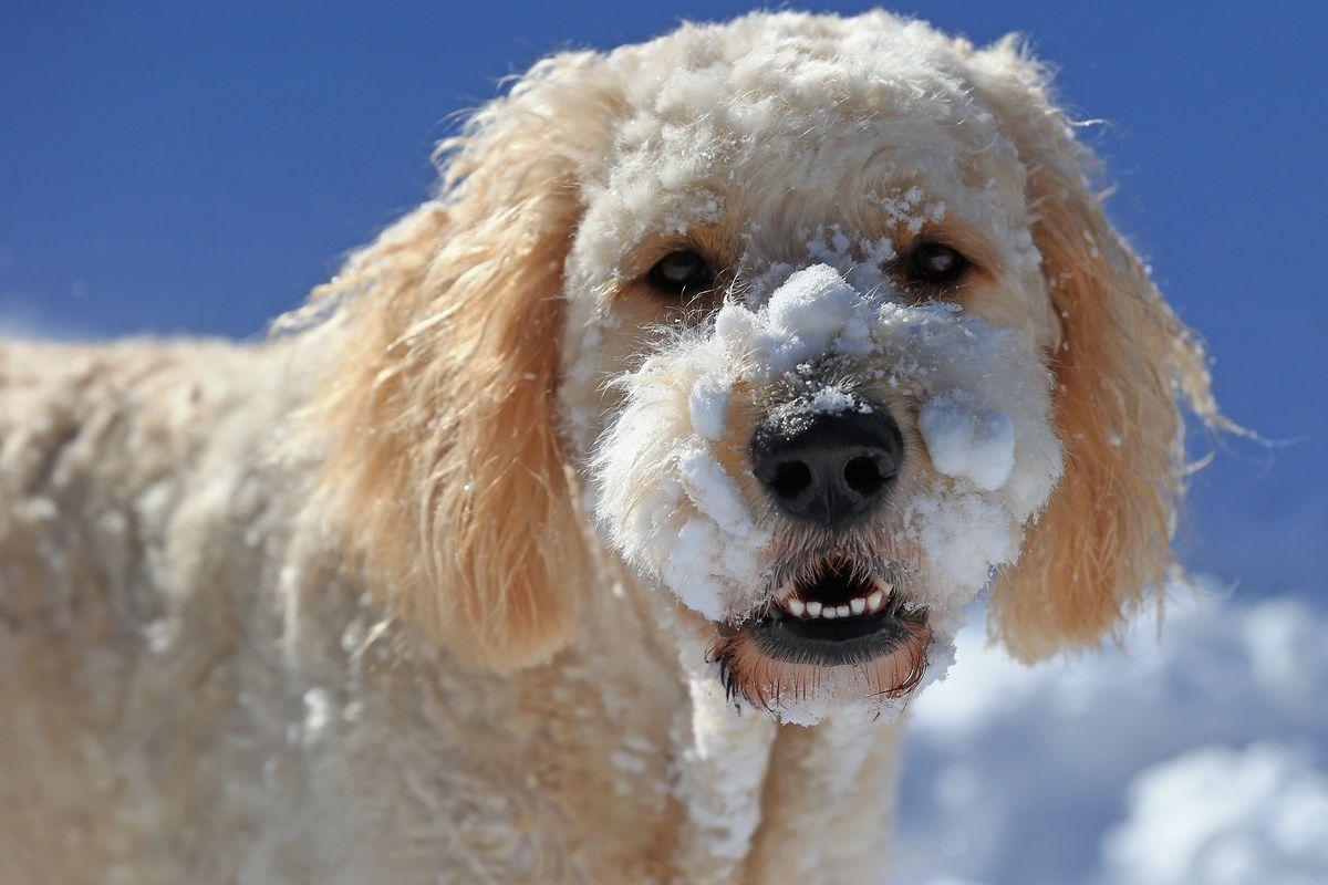 Dogs Enjoying Winter Storm Jonas