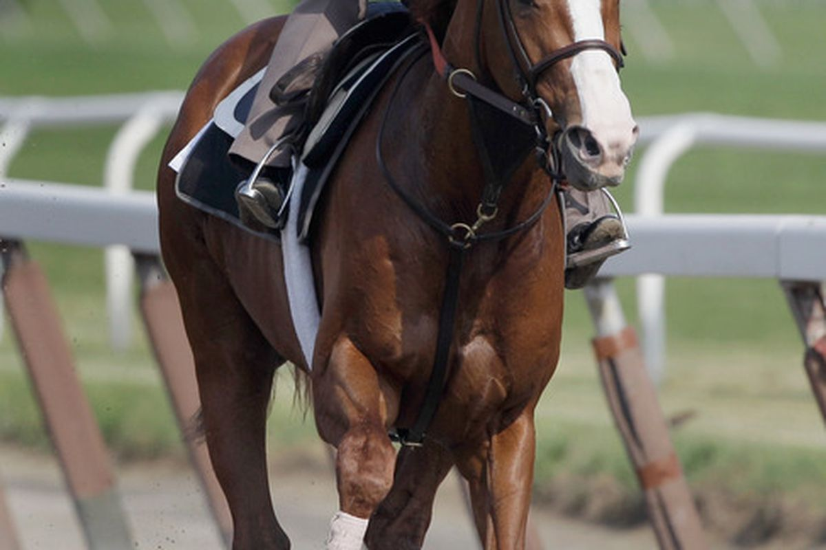 Preakness winner Shackleford has been one of the most consistent male horses of 2011.