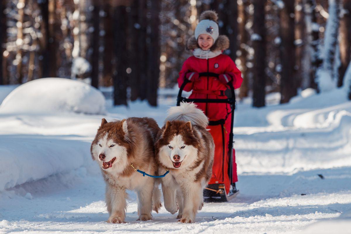 Best Friend program for children with disabilities in Kemerovo Region