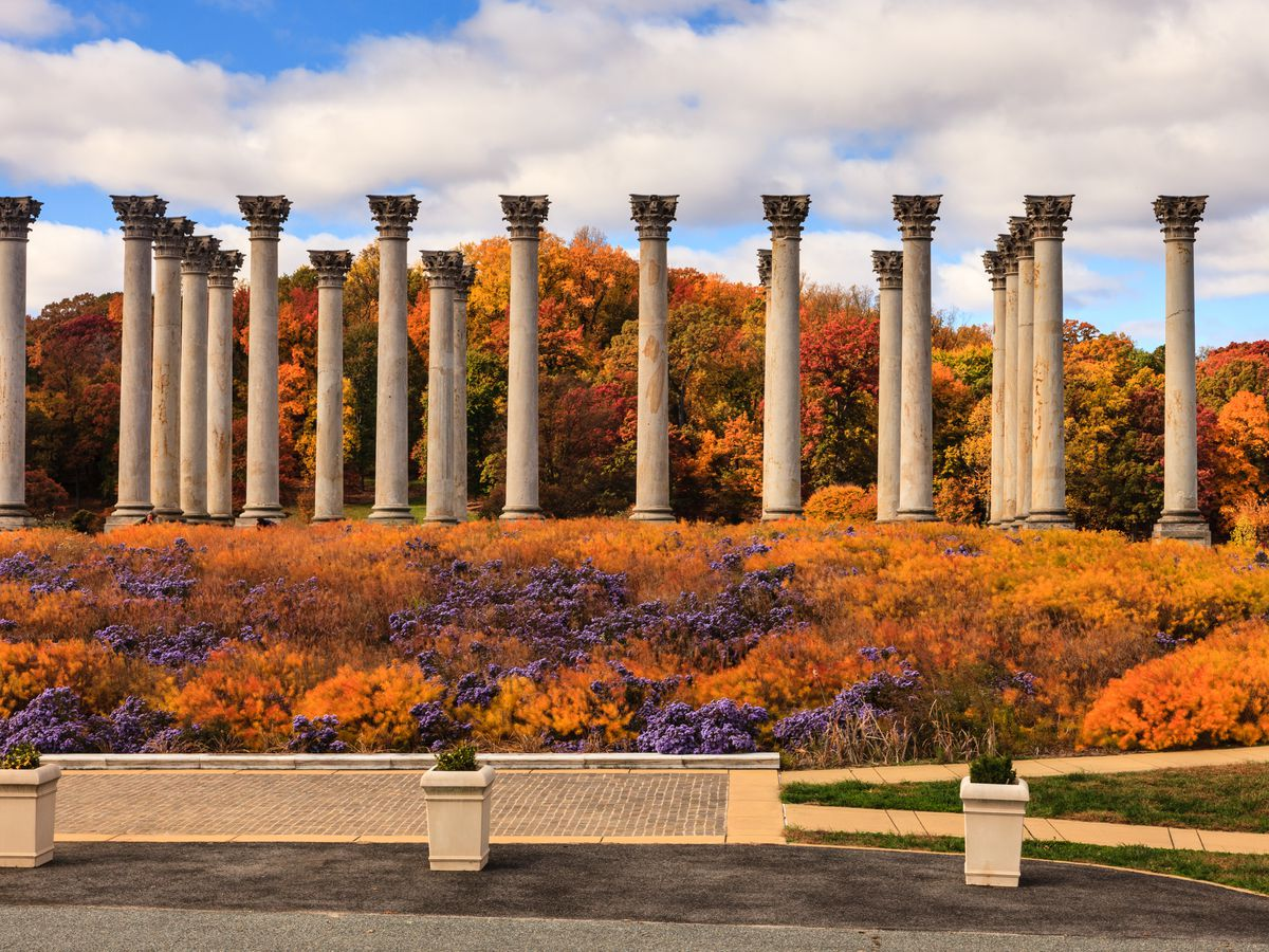 Greek-like columns in the middle of an open-air park filled with orange trees.