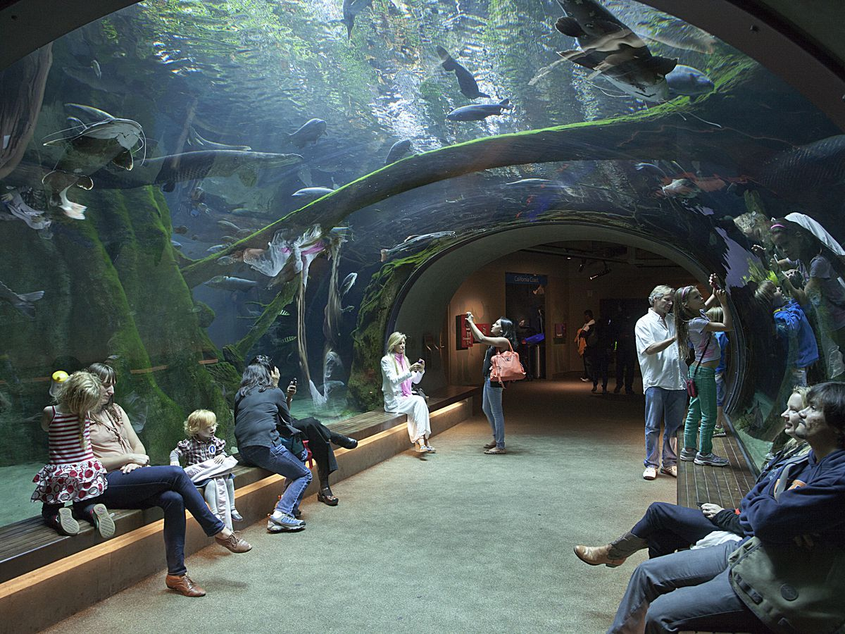 06b8383b 27 things to do in San Francisco with kids - Curbed SF