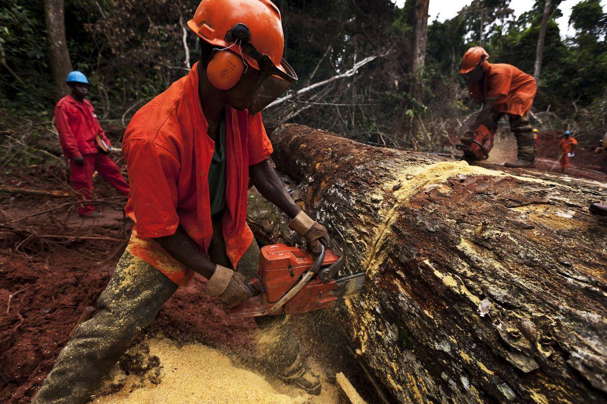Logging in Cameroon.