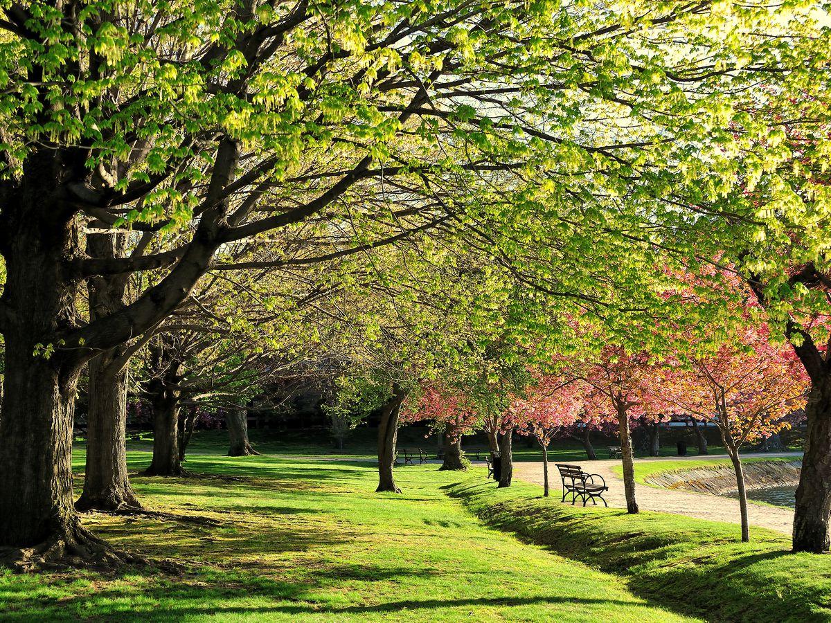 A lush shot of foliage in an arboretum.