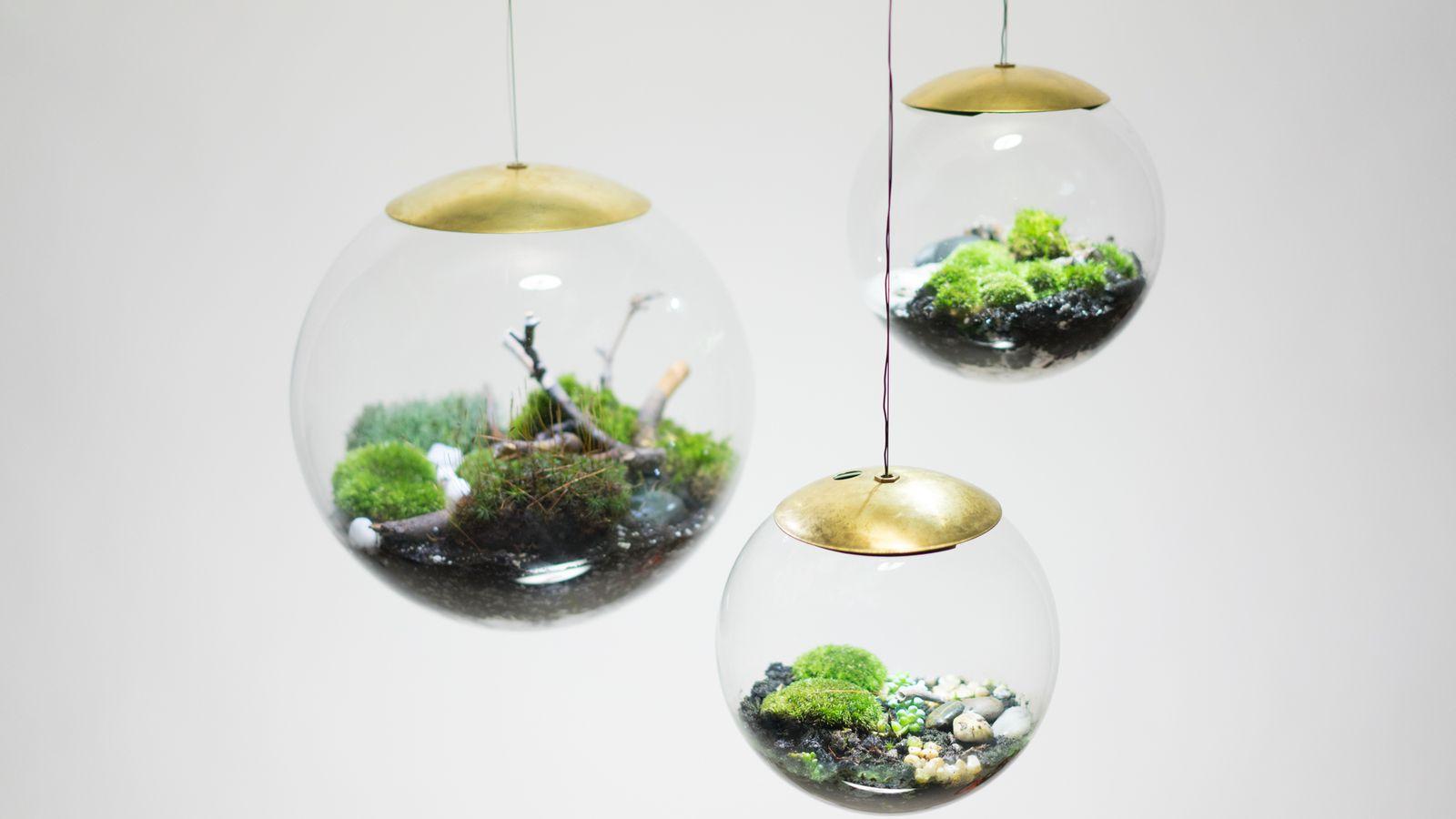 these terrarium lamps are pure plant genius curbed. Black Bedroom Furniture Sets. Home Design Ideas