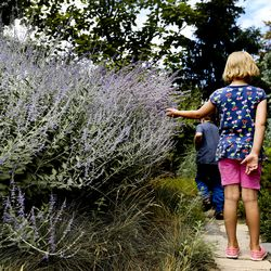 Alice Foote of West Jordan touches lavender as she tours the Jordan Valley Water Conservancy District garden in West Jordan on Thursday, July 29, 2021.