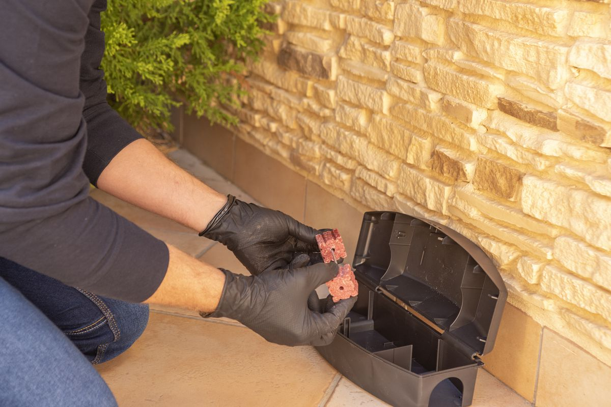 A professional wearing black gloves installs a rat trap outside a home.