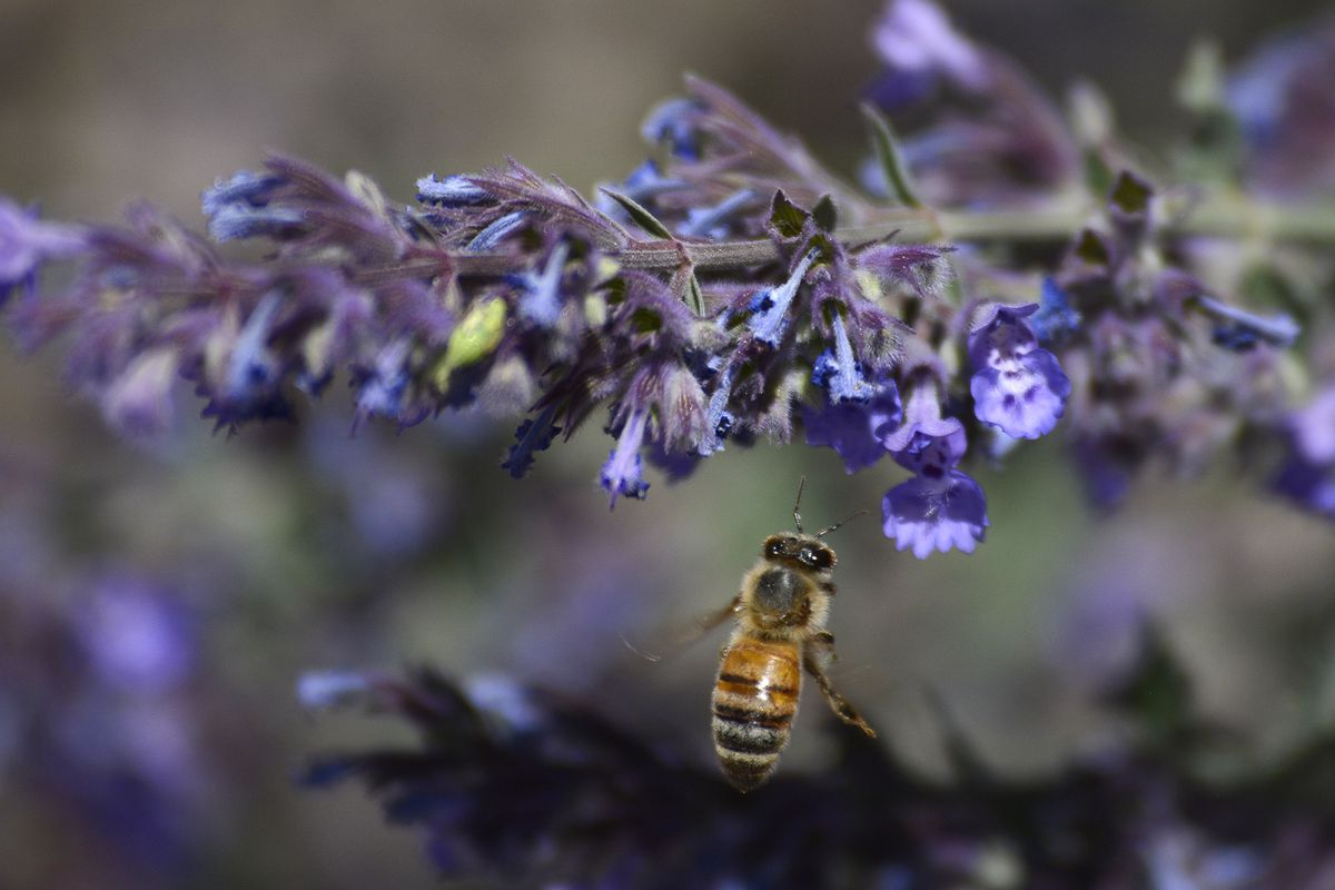 Honeybees can solve basic math problems - Vox