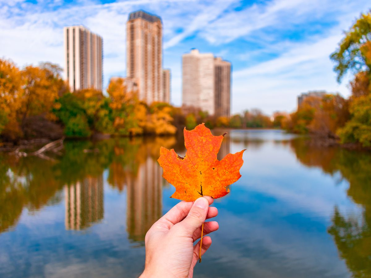 Where To See Fall Foliage In Chicago Curbed Chicago