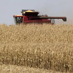 A combine harvests corn near Bennington, Neb., Thursday, Sept. 6, 2012. The remnants of Hurricane Isaac dumped heavy rain on some key Midwest farming states that dramatically lessened the drought there, but conditions worsened in two of the nation's biggest corn producers, Iowa and Nebraska, which missed out on the badly needed moisture, according to a drought report released Thursday.