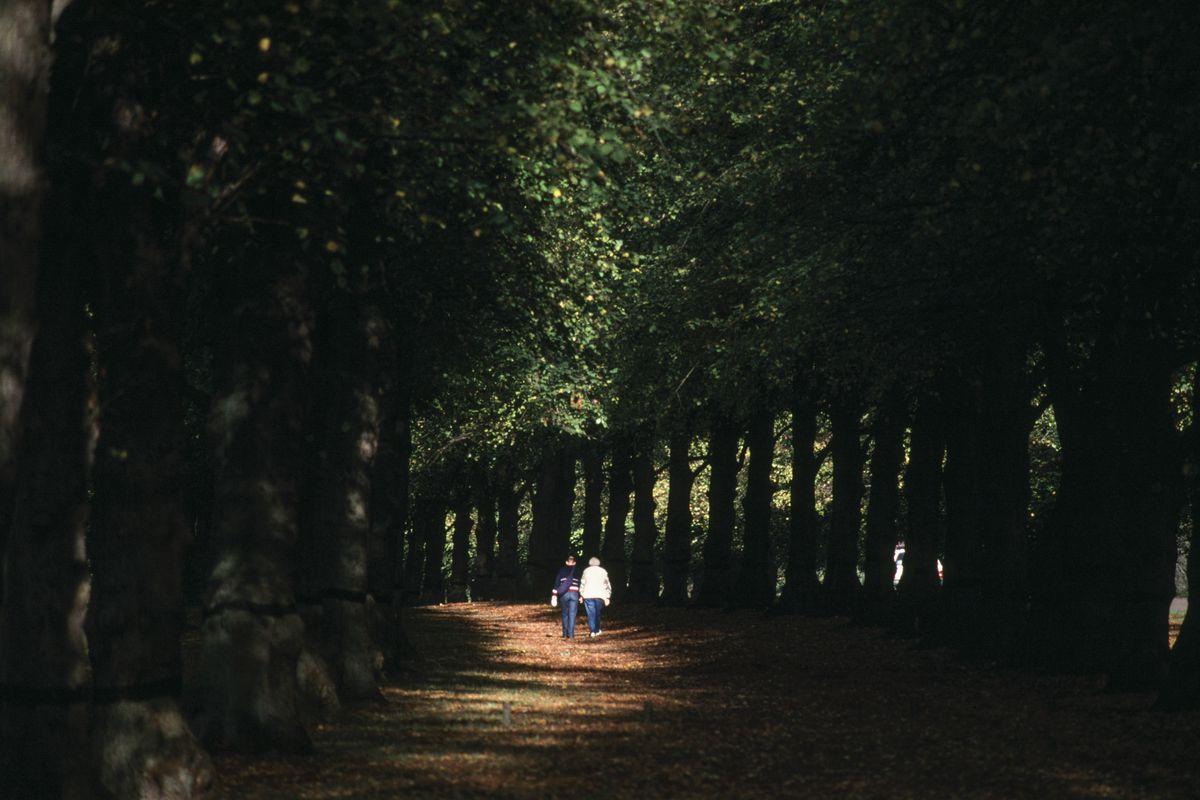Clumber Park, Sherwood Forest, Nottinghamshire
