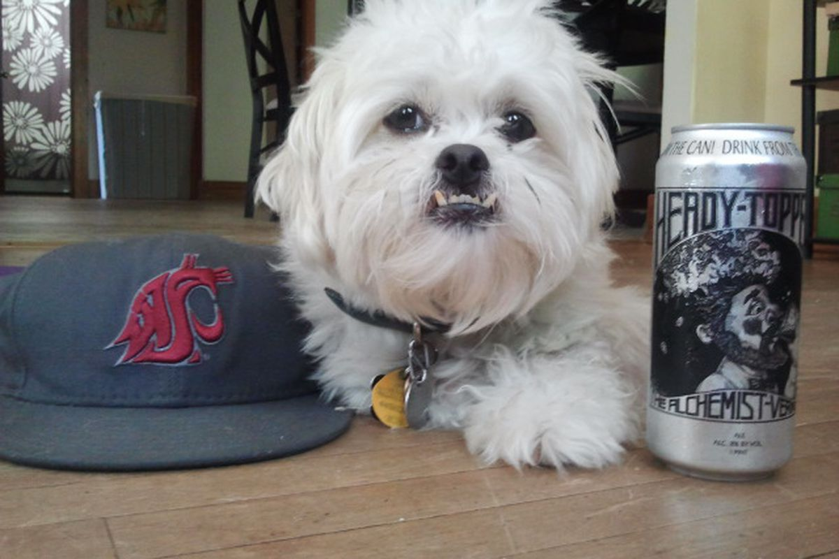 Baxter the dog will be enjoying an Alchemist Heady Topper this evening as he watches the WSU Cougars take on the UNLV Rebels.