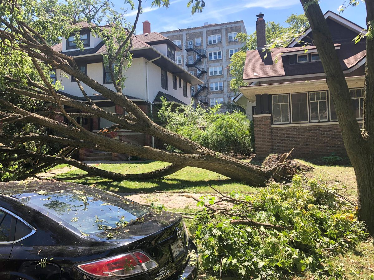 This tree was uprooted in the 1600 block of West Jarvis Avenue when a severe storm and tornado passed over Rogers Park on Monday, Aug. 10.