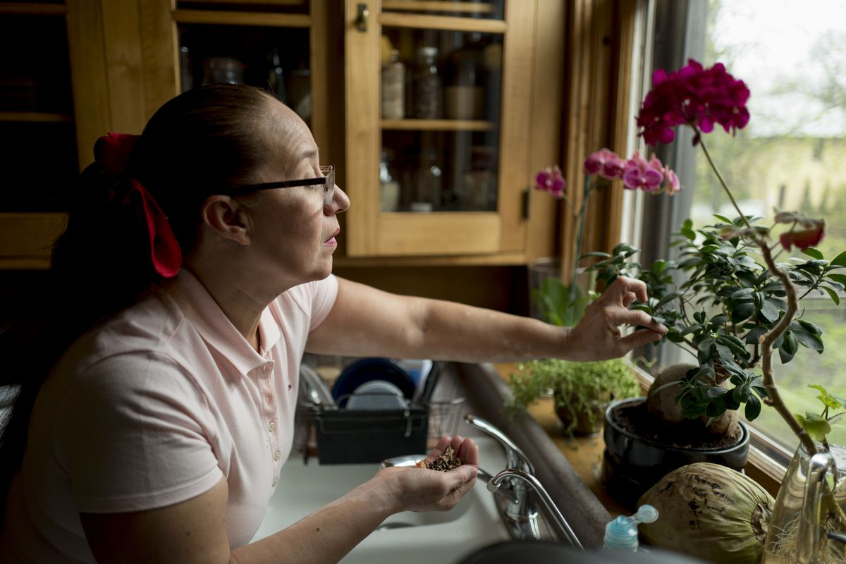 Gloria Velazquez was able to the stay in the United States legally after she received a U visa, for victims of serious crimes who cooperate with police. She is a live-in housekeeper for a family in St. Paul . She spent the morning cleaning and watering pl