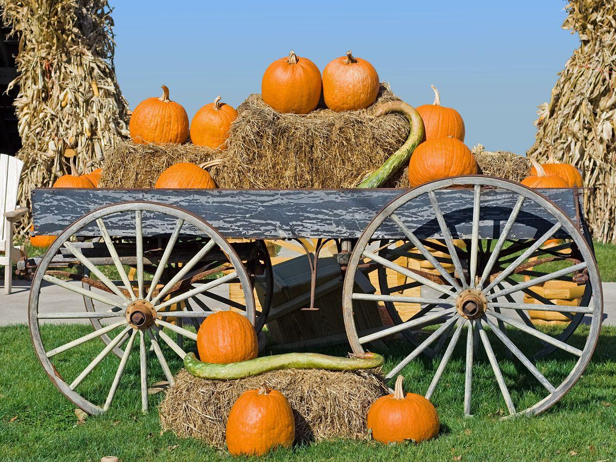 best pumpkin patch near chicago