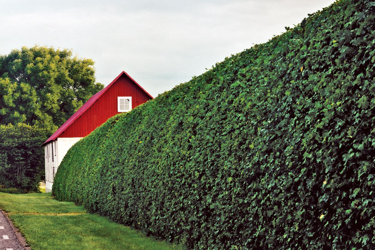 How To Maintain Hedges This Old House