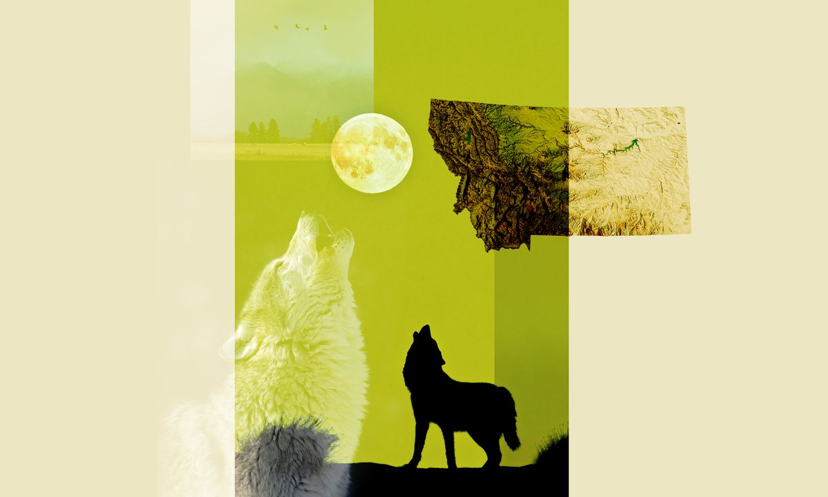 An illustration of howling wolves and a map of Montana.