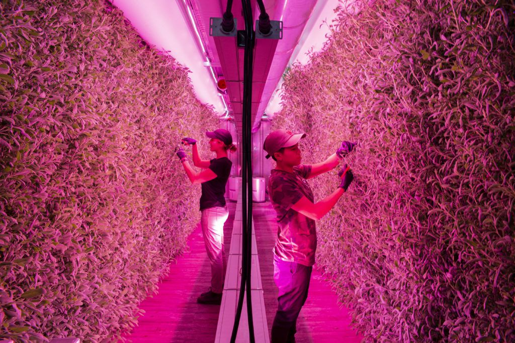Square Roots shipping container farming startup partners with Gordon