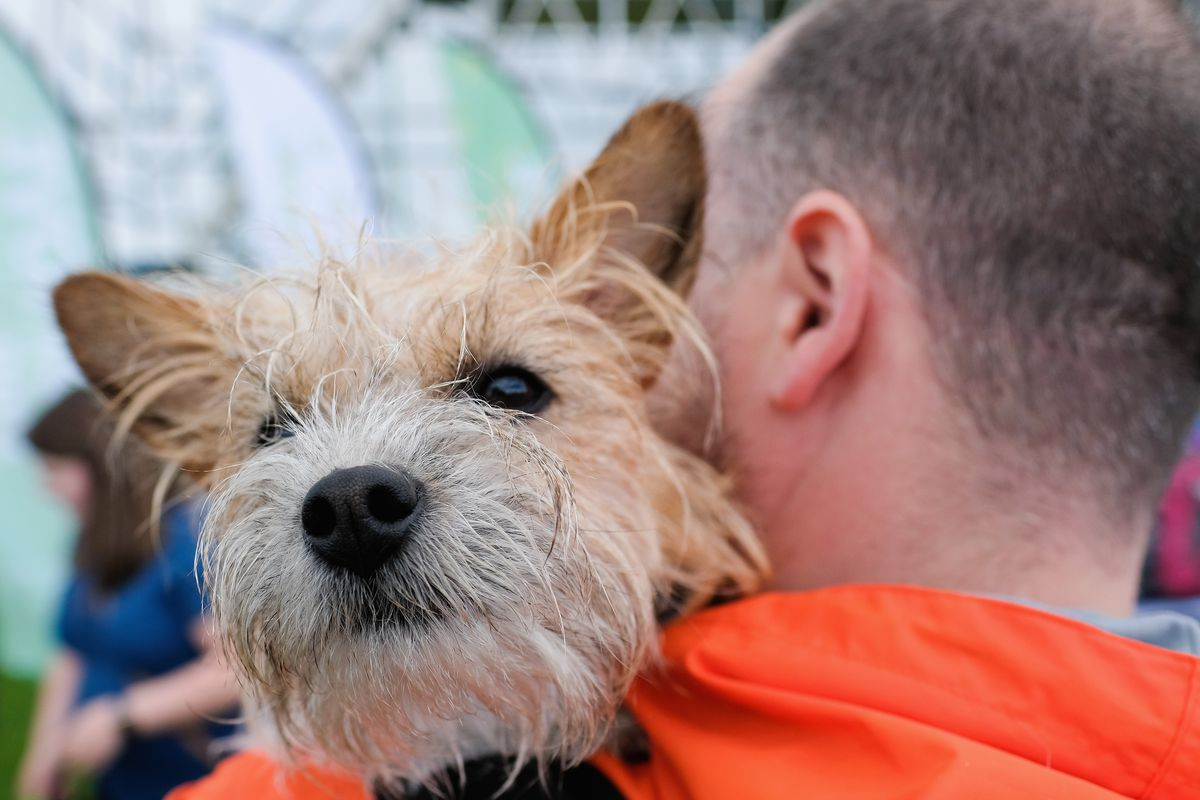 Thousands Of Dogs Take Part In The Great North Charity Dog Walk