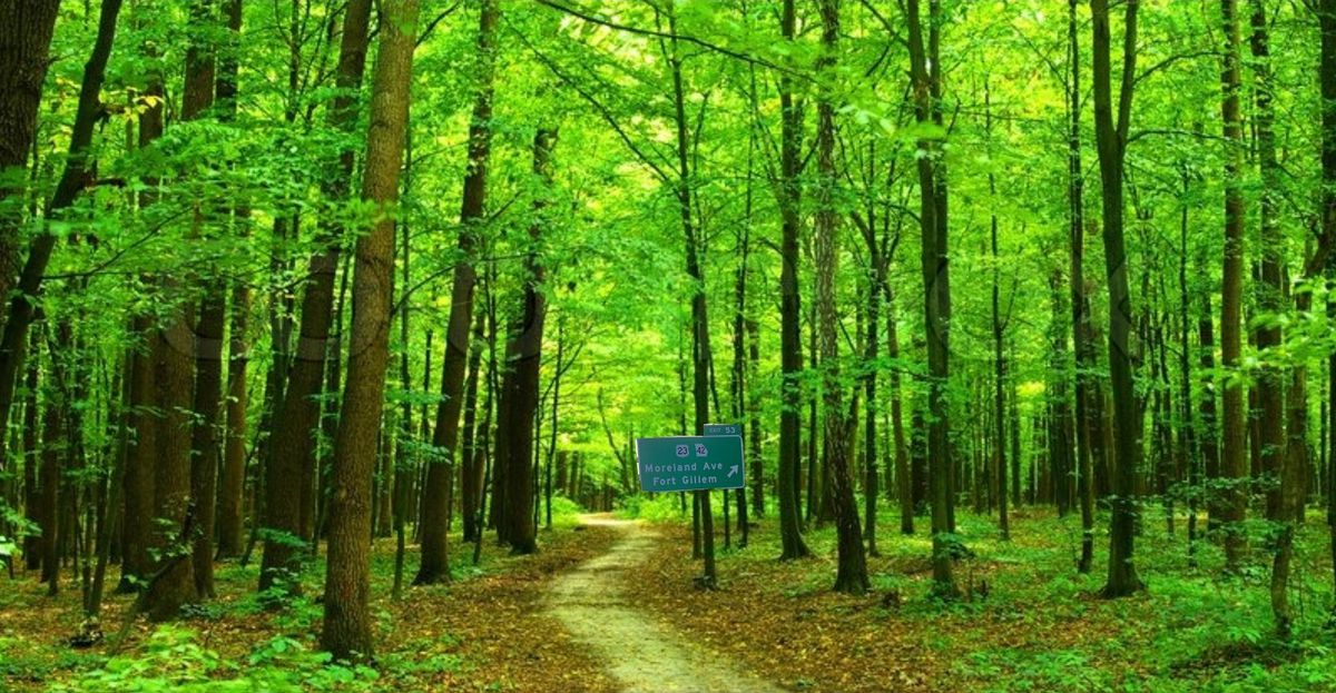 An image of an interstate sign in the middle of a forest.