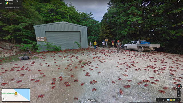 An infestation of crabs near a beach.